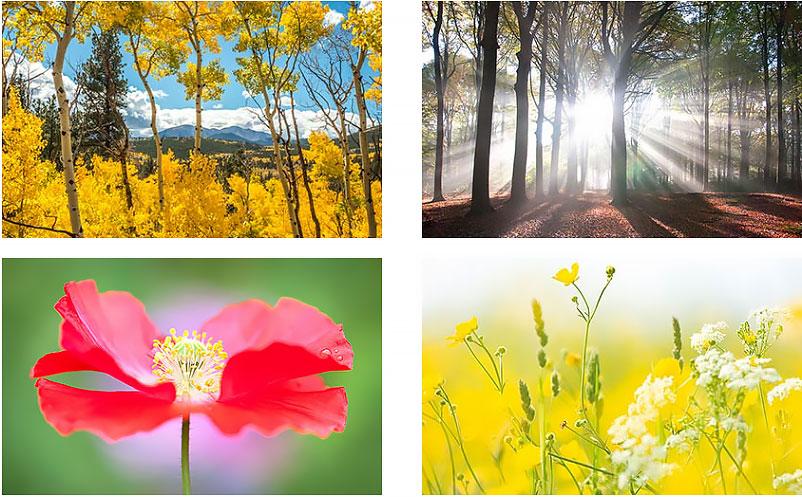 nature canvas prints